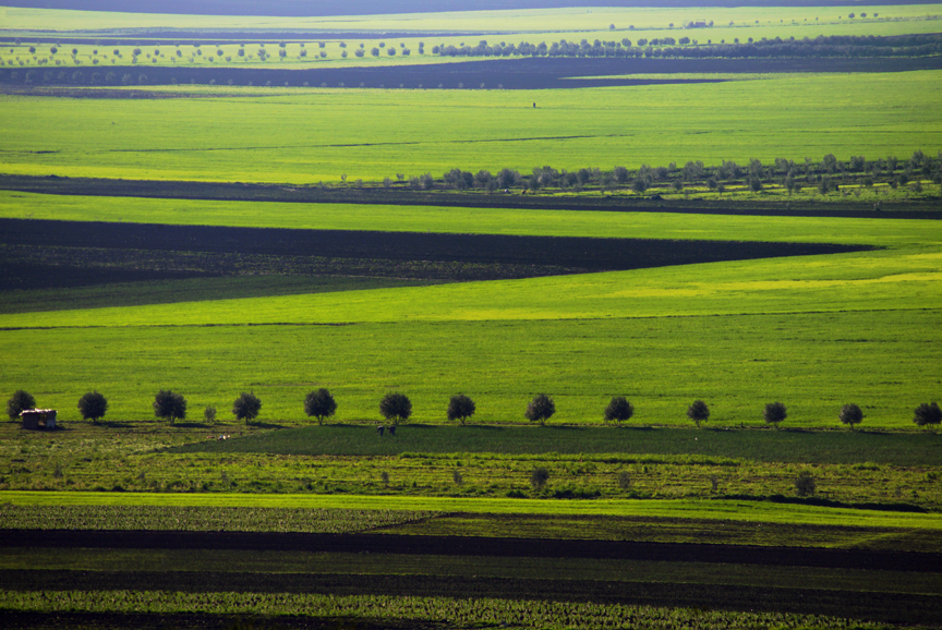 Morocco fields