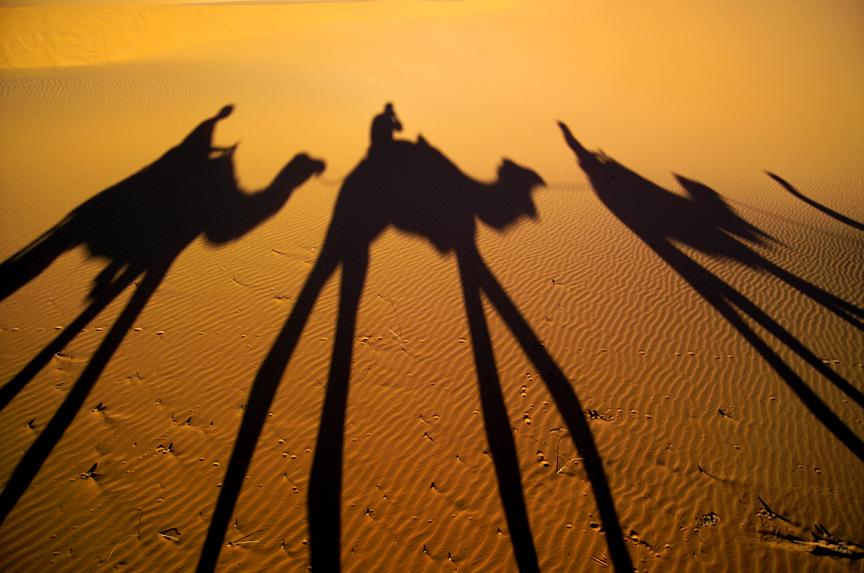 Morocco Sahara camel shadows